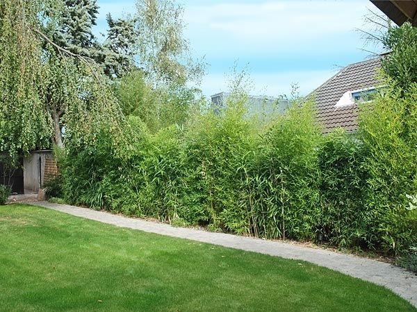 ... jardin maison jardin haie bambou de bambous jardin exterieur design