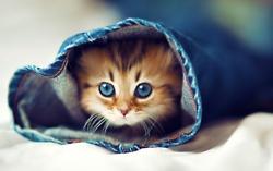 so adorable !