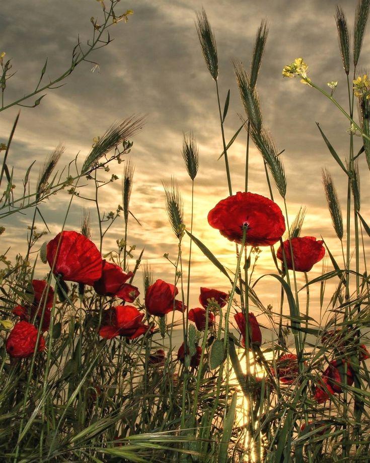 Floral Sonnenuntergang in Istanbul, Türkei Stop Verschwenden von Geld durch nicht mit UnlimitedSuns … #Himmel #Meer #Ozean #schöneorte #see #Seegang #Sonne #Sonnenuntergang #sonnenuntergangammeer #SonnenuntergangBilder #SonnenuntergangFotos #sonnenuntergangheute