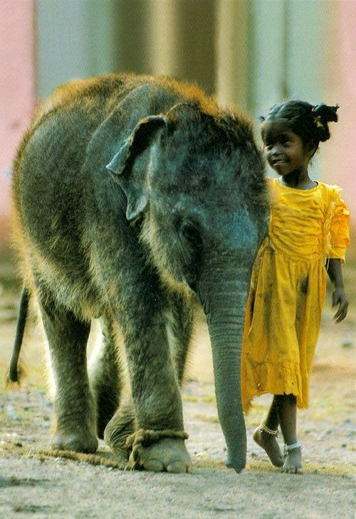 The baby elephant and the little girl