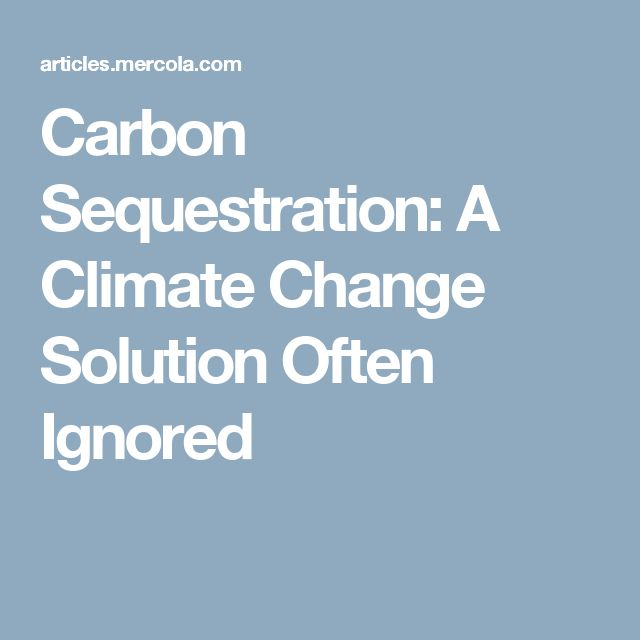 Carbon Sequestration: A Climate Change Solution Often Ignored