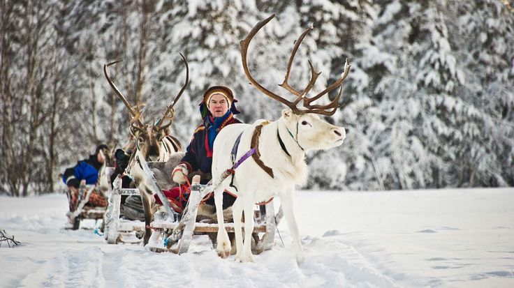 Reindeer and husky safaris in #Finland at the Kakslauttanen resort Cabins in #Saariselkä #Lapland http://www.saariselka.com