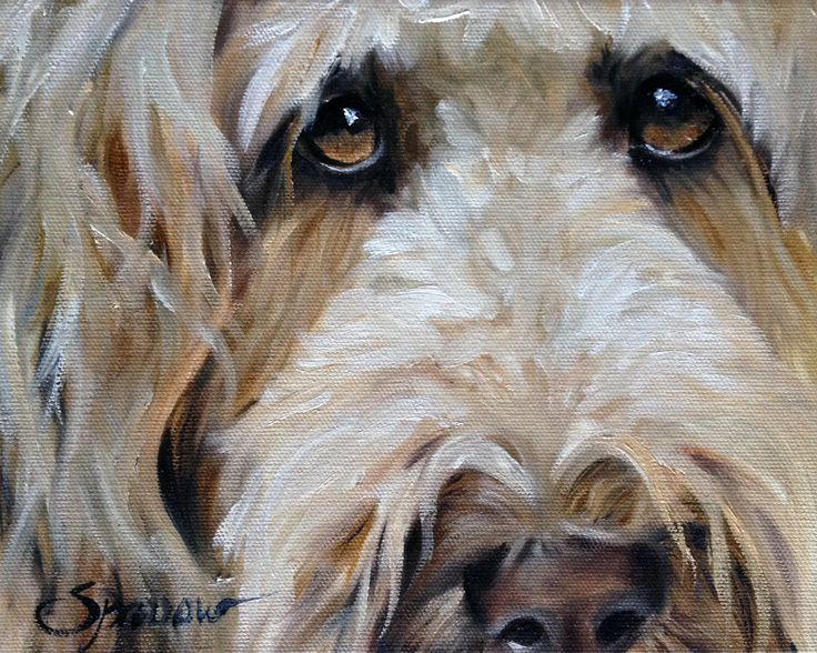 """PRINT Golden doodle Goldendoodle Art Print of Dog oil Painting Gift / Mary Sparrow of Hanging the Moon """"The Golden Girl"""" by HangingtheMoonShelby on Etsy https://www.etsy.com/listing/197283744/print-golden-doodle-goldendoodle-art"""