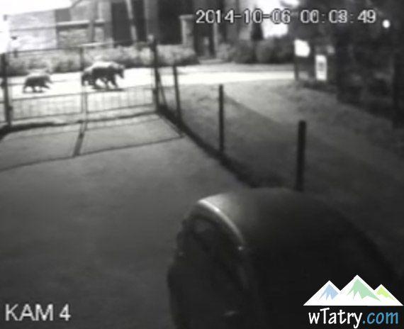 Cztery niedźwiedzie 2 km od Krupówek