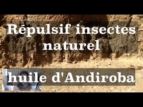 Les 25 meilleures id es de la cat gorie insecticide anti for Anti fourmi naturel maison