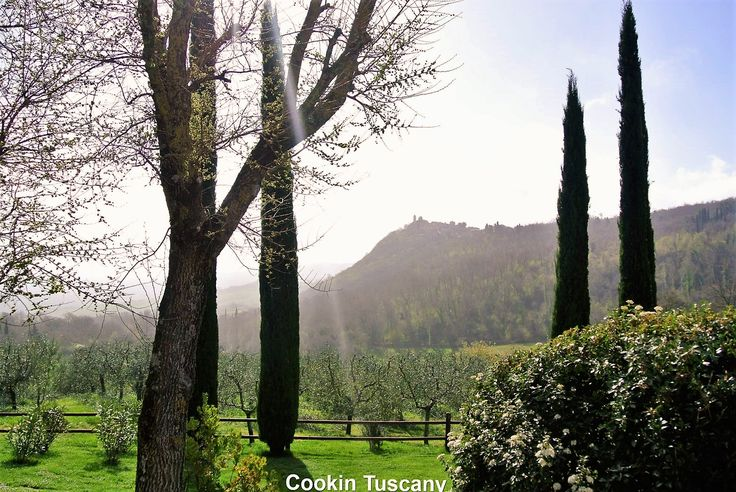 You can see Montefollonico on the top of the hill in the background of this photo.  www.cookintuscany.com   #tuscany #montefollonico #cookintuscany #Italy #cookingschool #culinary #cooking #school #montepulciano #cookery #cucina #travel #tour #trip #vacation #pienza #cook #tuscan #cortona #allinclusive #underthetuscansun