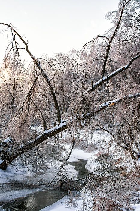 Humber River Winter 3.  The river near my home in Bolton, Ontario was strikingly beautiful after the massive ice storm.