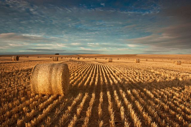 Bales bales bales by carlsmorenburg Overberg Western Cape South Africa