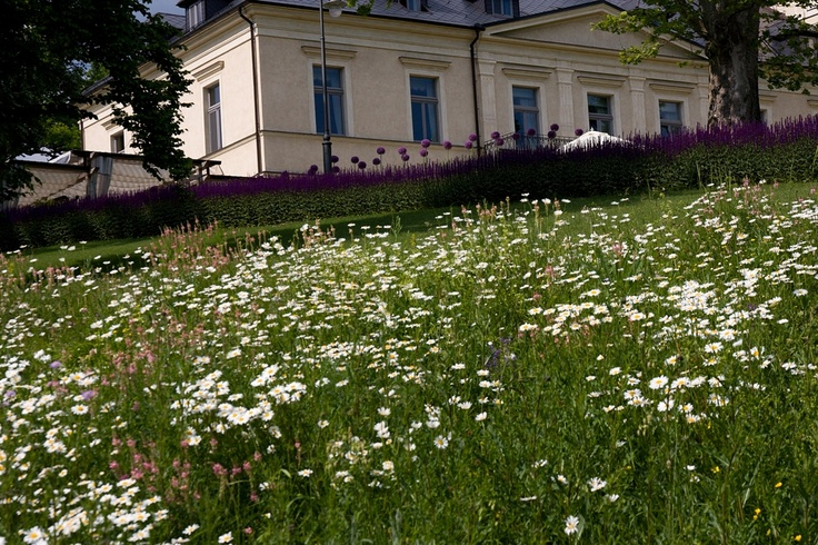 Beautiful meadow in the chateau's park