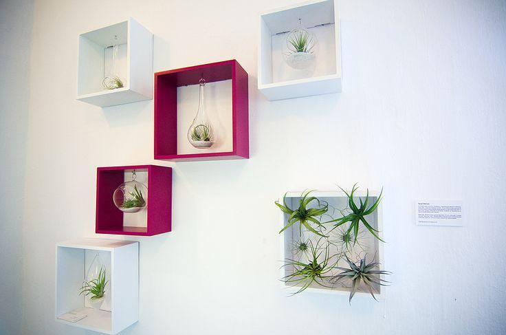 Framed airplant terrariums  https://www.etsy.com/shop/Aerium