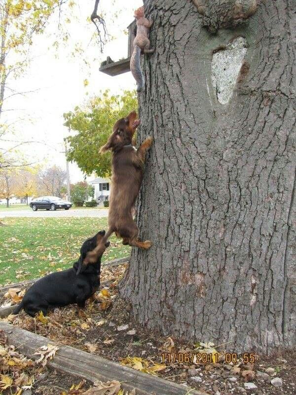 how to help a squirrel that is hurt