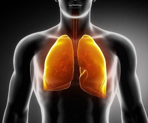 Scoprite tre gustosi infusi a base di piante medicinali per prendervi cura dei polmoni