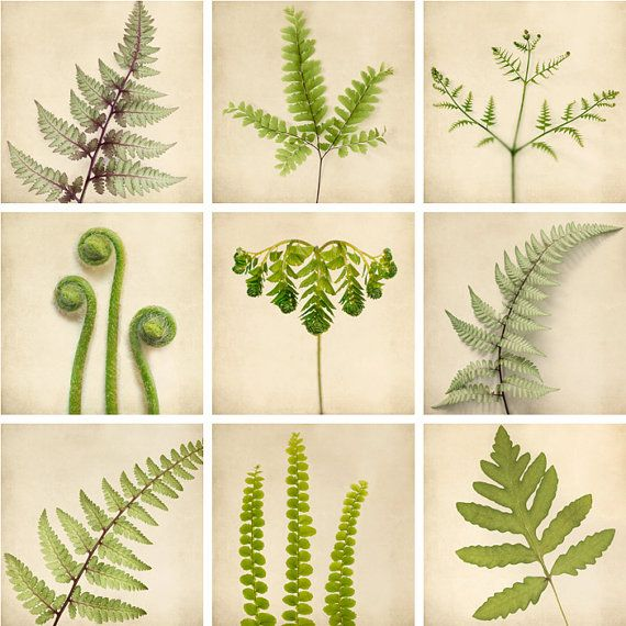 "5x5 Photo Print Set - Botanical Prints - Wall Art - Green Art Prints - Fern Art - Woodland Art Wall Decor - Nature Art ""The Fern Collection"". $72.00, via Etsy."