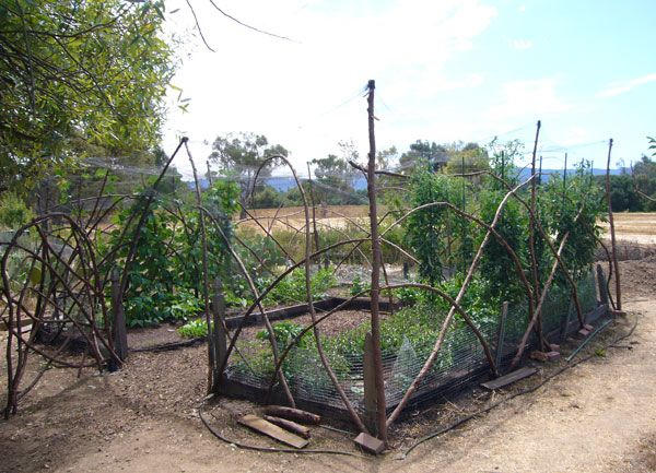 The Grow-it-Organically test plot at the Stanford Community Farm, 2006.