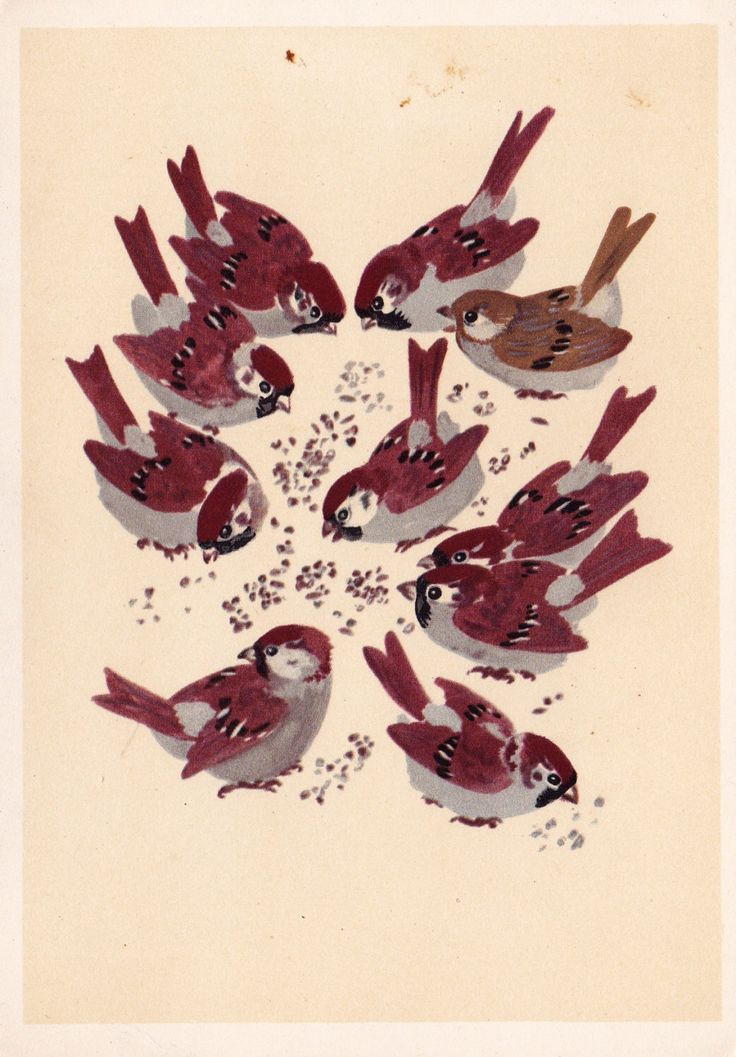"""E. Charushin """"Sparrows"""" Postcard -- 1967, Artist of RSFSR Publ. Condition 8/10 by RussianSoulVintage on Etsy https://www.etsy.com/listing/179448074/e-charushin-sparrows-postcard-1967"""