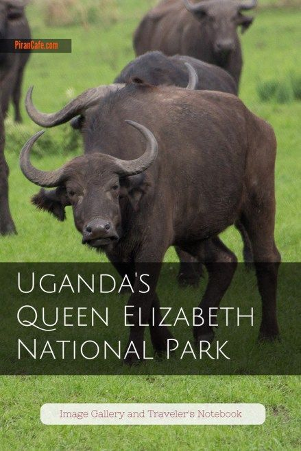 A traveler's guide to Uganda's Queen Elizabeth National Park, the country's most visted protected area.