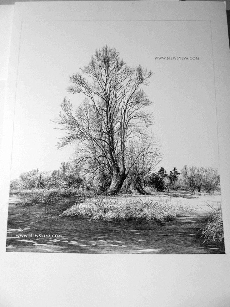 12 best Artist - Sarah Simblet images on Pinterest   Botanical art ...