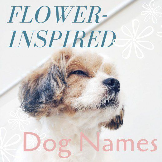 150 Beautiful Flower Names For Dogs Dog Names Beautiful Flower Names Dog Names Unique