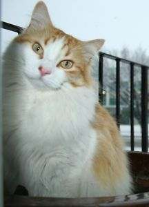 Date Listed	 06-Jul-13 Address	 Calgary, AB T2N 3Z4, Canada  View map I am 8 years old and my cat is my best friend. He got lost on July 29. He has white and orange fluffy fur and a fluffy tail. He likes people. Maybe you have seen him or maybe he has come to your home. Please call us if you have seen him. We miss him and love him so much. Me and my sister are so worried about him. Please call 403 226-4020 or 403 681-4024 anytime even in the night. We will give you a $100 reward.