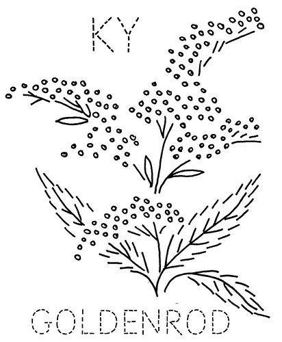 Kentucky Goldenrod   Flickr - Photo Sharing Goldenrod Coloring Page