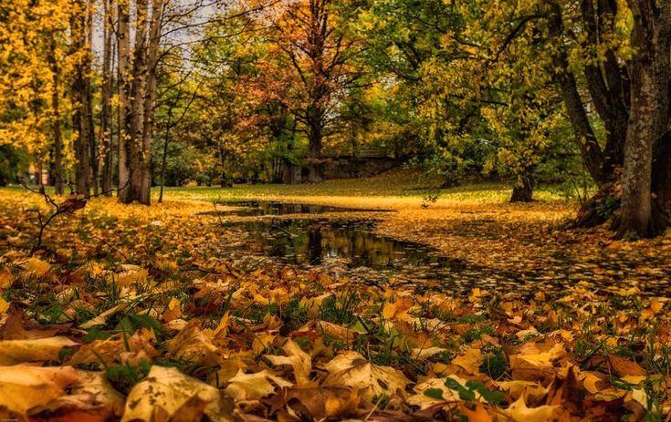 Sääkuva: Syksyinen Sibeliuspuisto