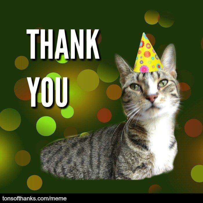 51 Nice Thank You Memes With Cats Thank You Memes Thank You Cat