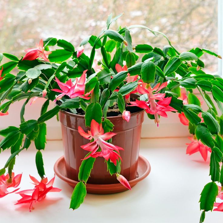 10 Nontoxic Houseplants That are Safe for Your Pets