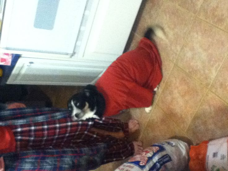Tippo in Dad's shirt. Adorable!
