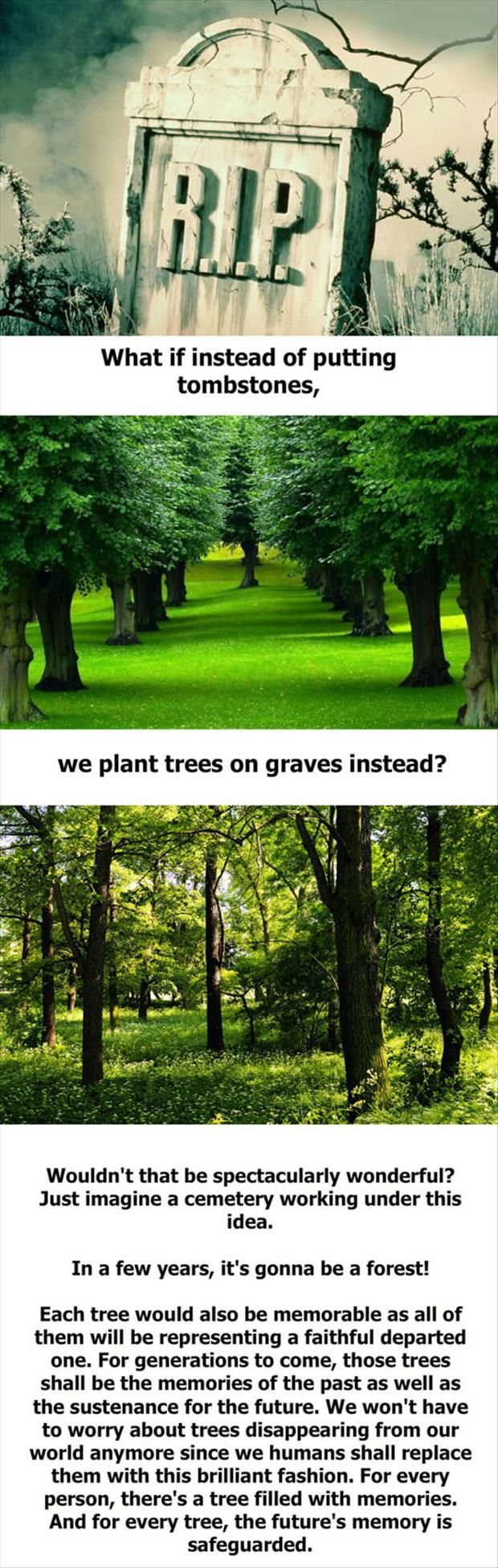 I would like to be buried under a tree.