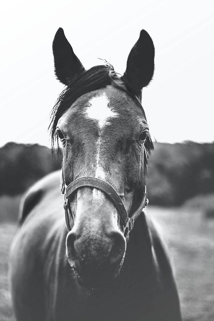 1001 Photos Pour Un Fond D Ecran Noir Et Blanc Parfait Pour Vous En 2020 Paysage Noir Et Blanc Photos De Chevaux Fond Ecran Cheval