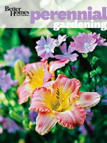 ajuga silver varigated better homes and gardens - 373×500