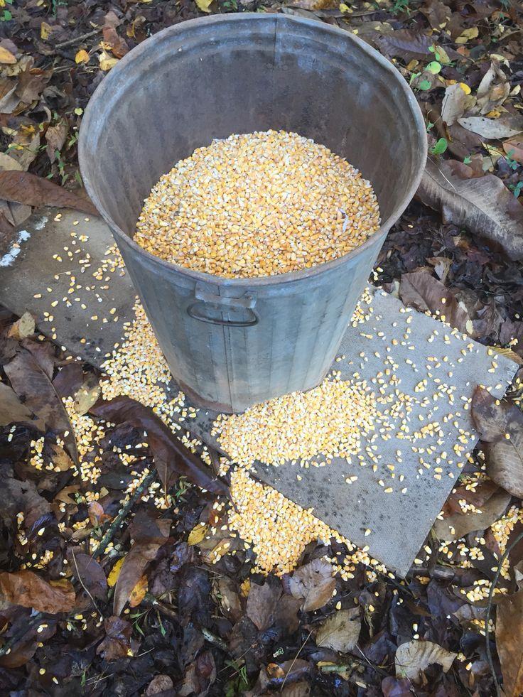 55 Gallon Deer Feeder (With images) Deer feeder diy