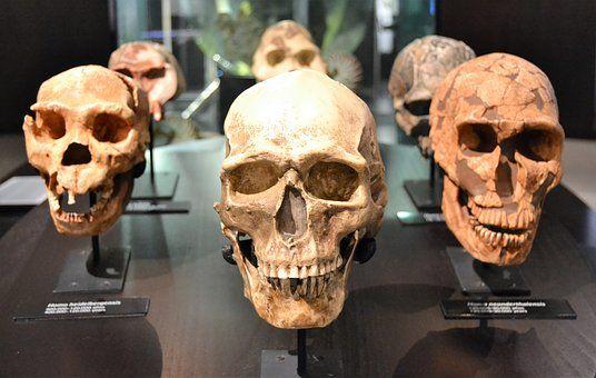 Calavera, Humanos, Huesos, Cráneo
