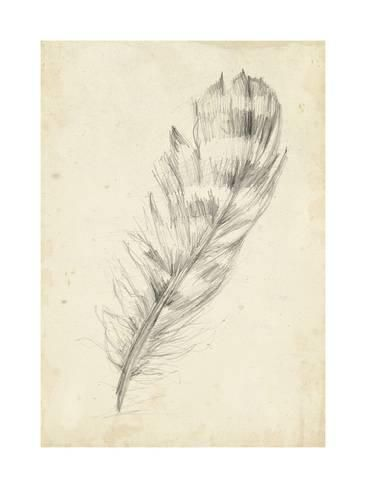 Feather Sketch II Reproduction d'art