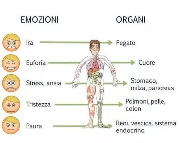 emozioni organi
