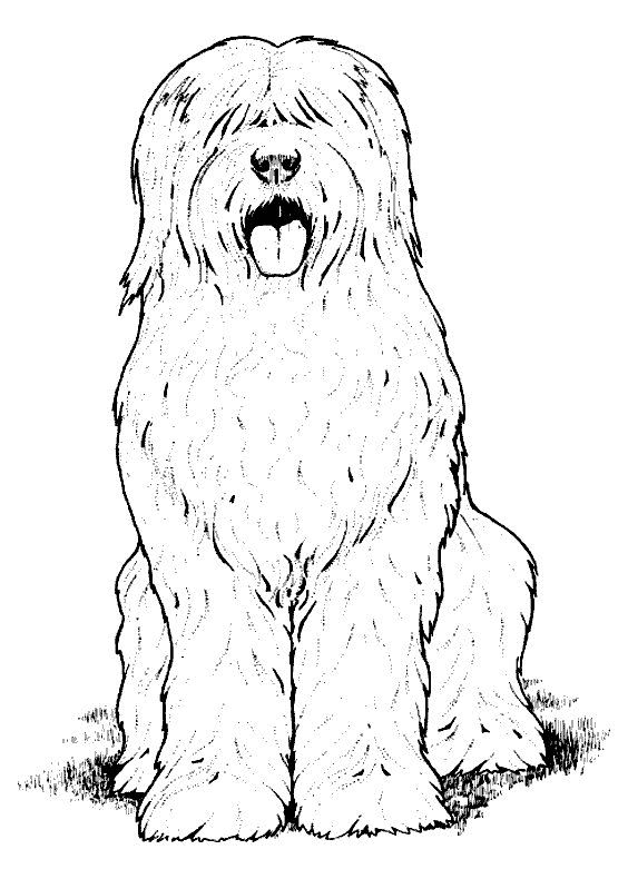 dog color pages printable | Coloring pages » Dog Coloring pages