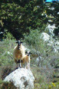 Actieve+dag+op+Kreta