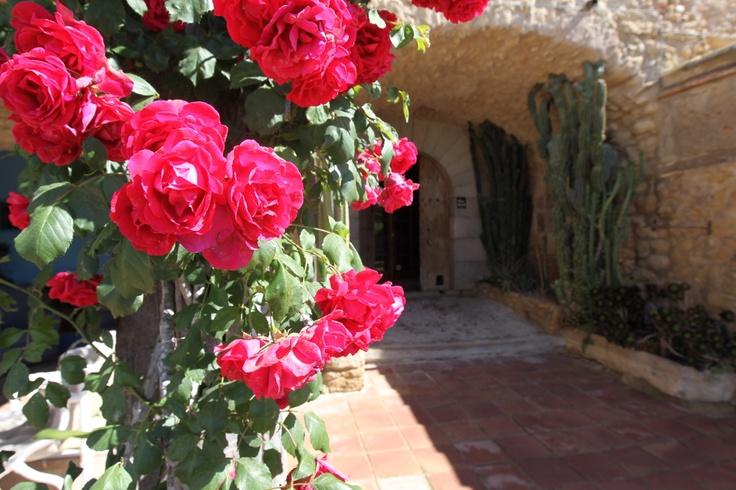 Cómo huelen las rosas de Can Gat Vell...