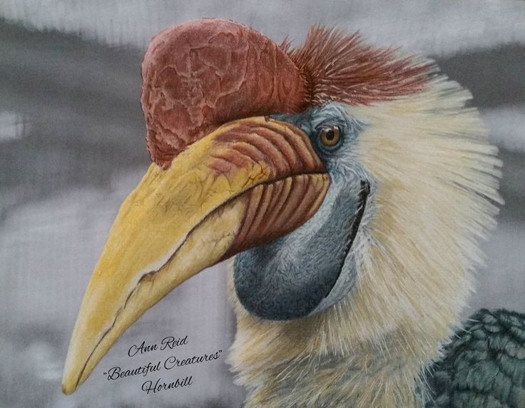 View the different ways people have colored the Hornbill bird from the Beautiful Creatures adult coloring book.