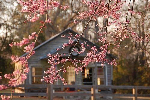 So serene and peacful setting, can I go right now?: Random Pictures, Cherries Blossoms, Dream, Inspiration Pictures, Trees, Mornings Coff, Cottages, House, Flower