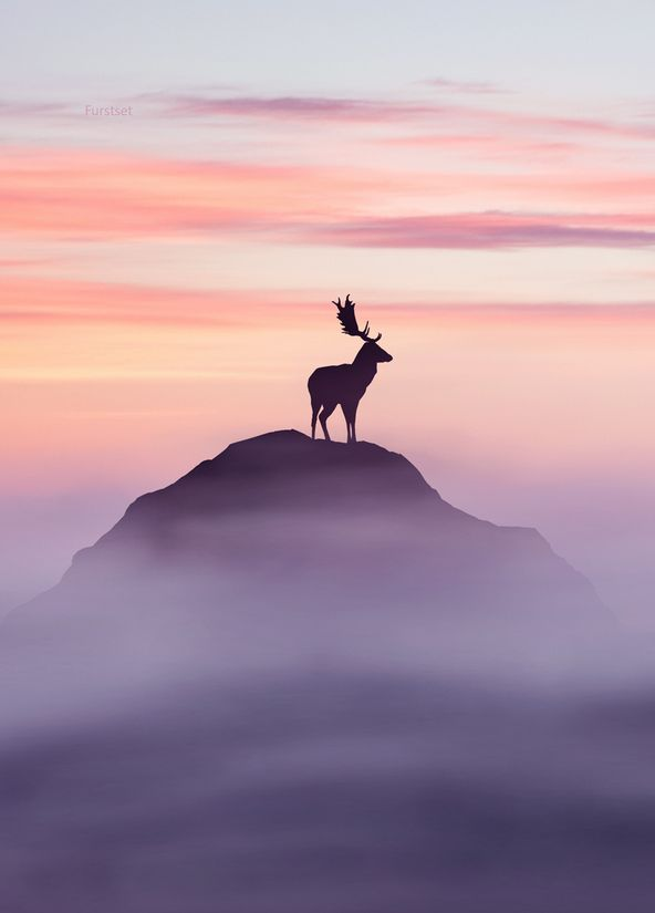 """Lord of His Domain."" Wow, what a spectacular photo!!!! Love this! <3"
