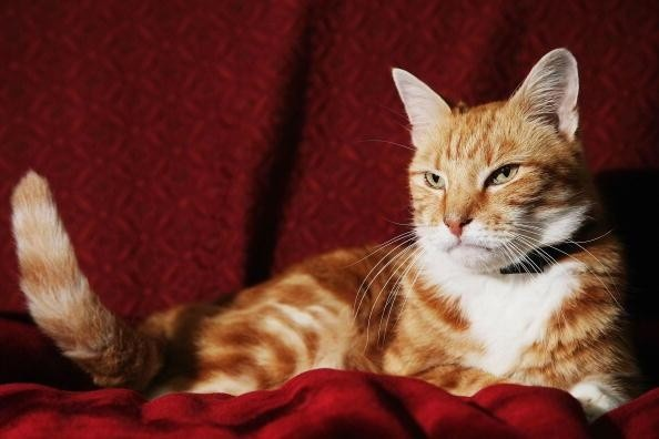 24 Best Images About Pets On Pinterest Cesar Millan Cats And Popular Dog Breeds