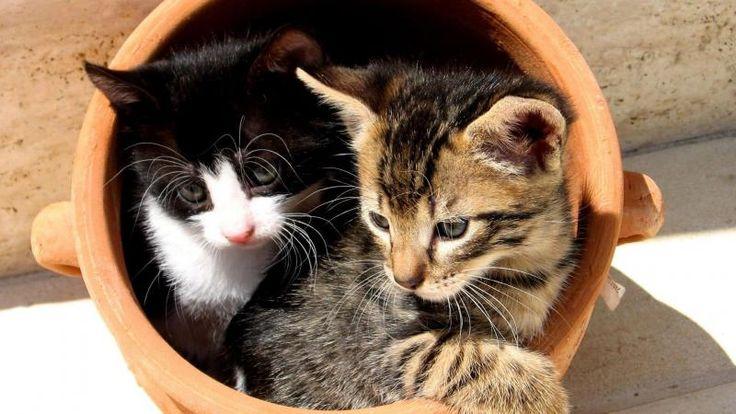 Kitten Pot