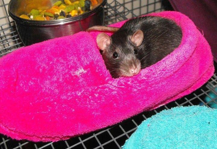 Slipper Rat Bed - PetDIYs.com