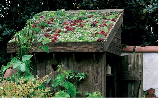 Living roof, for wood shed or bike cover?