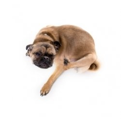 The itching and scratching! You just want it to Stop! Dog itching drives you and your dog crazy. So rather than just provide temporary relief,...
