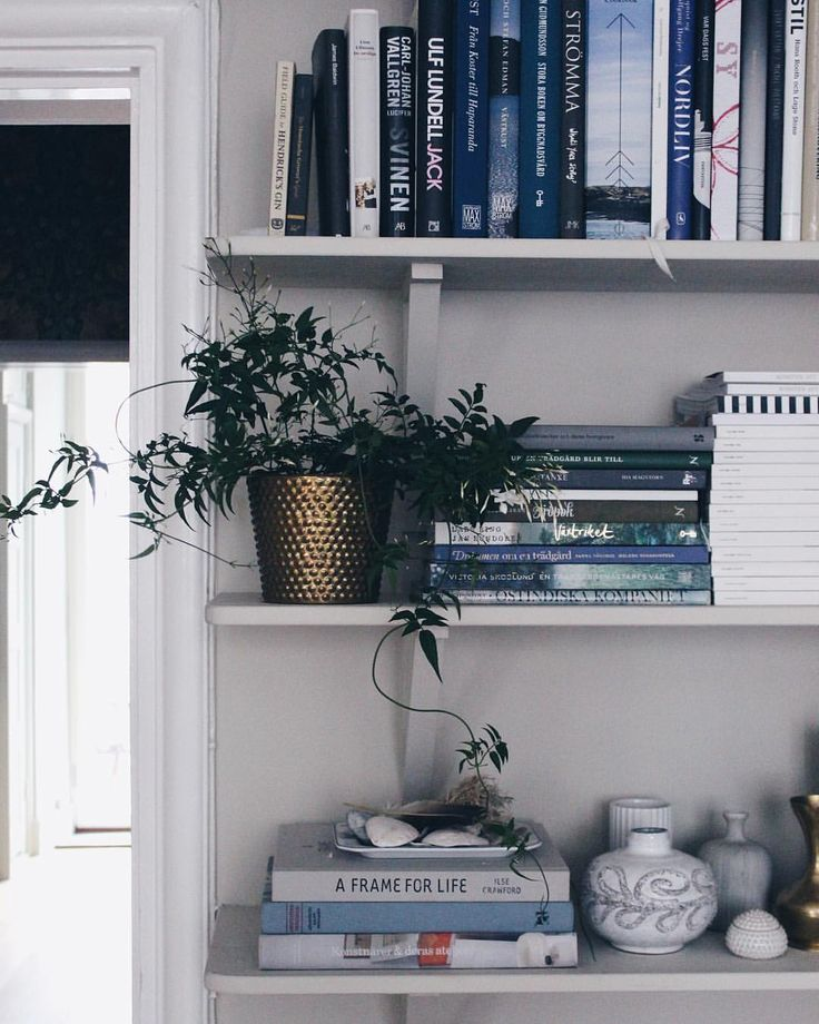 """Johanna Bradford (@johannabradford) på Instagram: """"Jag har tipsat om detta några år i rad nu men det tål att upprepas. Ni vet den där jasminen i kruka med båge som finns att köpa nu? Köp den, ta bort bågen och plantera i valfri kruka. Mycket finare utan båge!"""