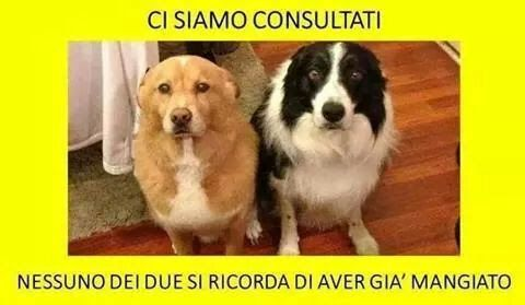 Riunione molto importante di cagnolini