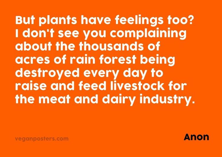 But plants have feelings too? I don't see you complaining about the thousands of acres of rain forest being destroyed every day to raise and feed livestock for the meat and dairy industry ~ anon #eco #vegan #crueltyfree