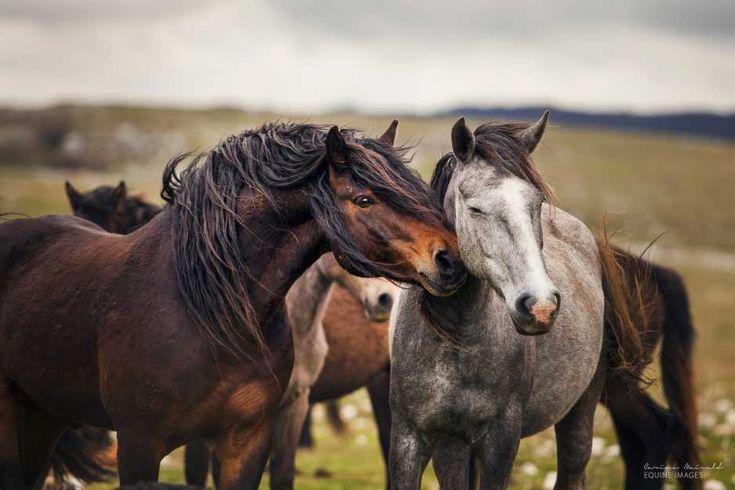 To najpiękniejsze zdjęcia koni, jakie kiedykolwiek zobaczycie [GALERIA]